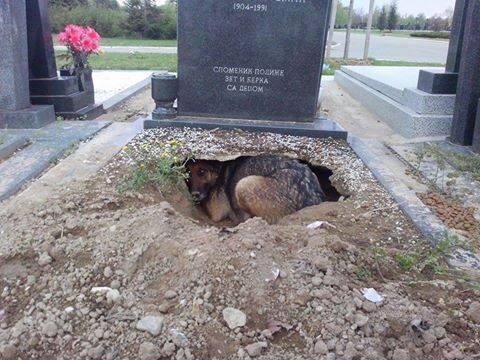 cane nella tomba del padrone